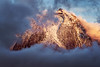 Azores - Mystic Pico (030mm-photography) Tags: rot azoren azores insel portugal archipel pico picoisland picovulkan vulkan stratovulkan spiegelung see sonnenaufgang sunrise alpenglühen alpenglow reise travel landscape nature natur landfschaft