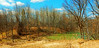 Beaver dam rivière Blanche DSCN3675 (dodochampo) Tags: beaver dam barrage castors rivière river blanche arbres printemps spring ciel