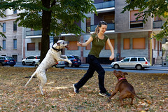 Afternoon Playtime (HungryArtistMadCow) Tags: summer playtime chill cold warm fun italy milan day life dogs pitbull dalmation doggpark
