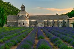 Abbaye Notre-Dame de Sénanque (toniyoo) Tags: lavender lavanda valensole france flowers fields sunset sky
