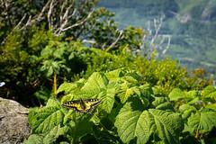 Mailbox Peak (enigmaticjoy) Tags: outdoors pacificnorthwest washington hiking