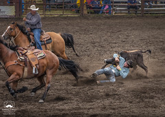 Steer Wrestling, Part 3 (allentimothy1947) Tags: 2018 california duncansmills saddle sonomacounty boots bridle competition cowboy horns horses jeans riders riding rodeo rope roping russianriverrodeo shirt steer steerwrestling takedown