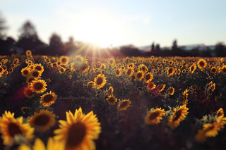 ~ field of happiness ~
