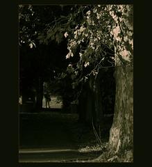 cruzar el parque (pilaraf14) Tags: trees sombras shadows oscuridad darkness luz light caminante walker árboles