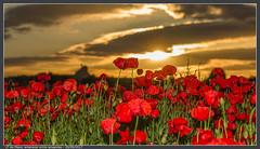 1º de Mayo, amanecer entre amapolas (PacoRS) Tags: solrasante naturaleza flores amanecer amapola amapolas flor