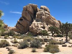 Hidden Valley Campground, Joshua Tree National Park (tmvissers) Tags: desert california nationalpark joshuatree campground valley hidden