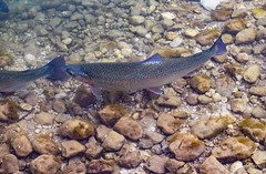 Cumberland Wildlife Park (kjg244) Tags: austria grunau im almtal wildlife park lakes fish