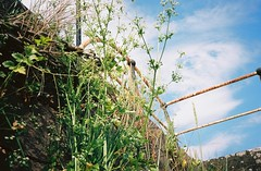 Looking up at the harbour wall (knautia) Tags: riveravon bristol england uk july 2018 film ishootfilm olympus xa2 olympusxa2 kodak kodacolor 200iso nxa2roll34 river avon mud cumberlandbasin floatingharbour lowtide