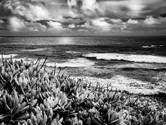 Heritage Trail View in Kauai (f.albertowilson) Tags: kauai mahaulepuheritagetrail trail mahaulepu coast ocean landscape plants blackandwhite bw clouds foliage panasonic g85 lumix hawaii 15challengeswinner