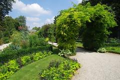 JLF18031 (jlfaurie) Tags: jardin garden bagatelle paris france francia parc parque 22072018 mpmdf jlfr jlfaurie mechas roseraie fleurs roses rosas