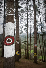 Oma - Bosque (emubla) Tags: bosque oma arboles arte ibarrola cortezubi vizcaya bizkaia paisvasco