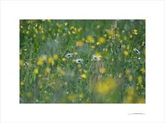 Los paisajes mínimos (E. Pardo) Tags: paisajesmínimos flores flowers blumen colores colors farben luz licht light steiermark austria