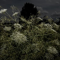 TERRA INCOGNITA (Grant Simon Rogers) Tags: grantsimonrogers ƒ artist artistphotographer photographer create making looking walking seeing learning practicepracticepractice terraincognita leica leicaq leicasf40flash dayfornight daylightwithflash picturemakingnottaking cookinginthecamera livelearn learningthroughplay thinking flâneur flashing hichabitatfelicitas photopsychotherapy individuation jungheart thinkingaphotograph thefirst10000 tempelhoferfeld tempelhof berlin deutschland de europe therepublicofheaven thesodomandgomorrahphotographicsociety themanwhoflashedinthegrass weallneedahug keepsharingthebeauty flickr instagram facebook twitter skylark skylarksoverberlin ail