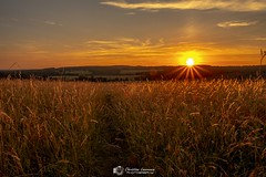 The Golden Hour (Christian Lawrence Photography) Tags: sunset corn field south downs fuji sussex landscape sunburst