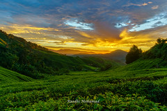 Waiting for the sun at Cameron Highlands (Rusdhi Mohamad) Tags: cameron highlands malaysia sunrise tea plant green clouds sky golden blue trees peaceful