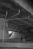 San Jose (bior) Tags: sanjose guadalupeparkway guadalupeexpressway underpass overpass freeway fujifilmxt1 concrete cement