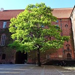 Stockholms Stadshus - Tree in the Court thumbnail
