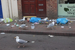 IMG_1000px (Paul Russell99) Tags: weymouth litter seagulls