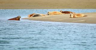 Seal gathering