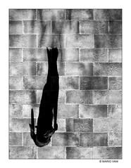 Black Cat (Mario Vani) Tags: urban street exploration fotografie photography pictures fotoshop art creation photos photographers photo portfolio online digest web gallery share professional social outstanding community fresh seconds commercial thefoto foto awards wallpaper lights italy wild particolare allaperto auto bianco nero monocromo una sfondo bn black white model cat animal biancoenero perspective composition mariovani