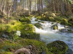 Strummen (turbok) Tags: bach karstquelle landschaft strummen wasser c kurt krimberger