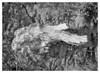 Elephant Skull (EFRH) Tags: monochrome bw driftwood sony ilce7