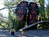 Poor Giant (112/365) (robjvale) Tags: nikon d3200 adventurerjoe lego project365 giant boots axe chop gold treasure wood trees