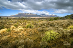 New Zealand (Ed Kruger) Tags: allrightsreserved aotearoa edkruger millakruger nz newzealand northisland rodionkruger tongariro abaconda blue clouds copyrights forest green horse kirillkruger kiwi morning mountain park plants qfse rodkruger sky snow sun sunrise sunset tongarironationalpark travel travelphotography tree winter yellow