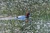 _DSC6692 (Inapapel) Tags: 2018 d7200 txingudi biodiversidad birds birdhunting birdphotografy birdwatching flickr fauna animals aves ave hegaztiak