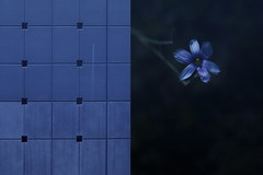MMM Minimal/Maximal (Carrie McGann) Tags: hmmm mosaicmontagemonday mosaic montage wall wildflower flower minimalmaximal nikon nikond850 interesting