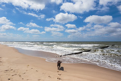 Bałtyk, 06.2018 (mikee.wilczek) Tags: blue baltic sea bałtyk morze bałtyckie wavebreaker wave water birds wildlifephotography birdphotography dogs dog puppy lab pool pet cute labrador labradorretriever crow crows raven birding ravens bird caw research biology how science jackdaw corvids smart animals nature wildlife beach ocean waves oceanwaves oceansounds surf whitenoise meditation oceanwavesrelaxation landscapephotography photography landscape tutorial landscapephotographytutorial landscapephotographyvlog photographyonlocation outdoorphotography landscapephotographytipstechniques composition photographytips landscapephotographyhintstips landscapephotographytips photoshop depthoffield shutterspeed aperture landscapephotographysettings photographysettings photographyvlog longexposurephotography photographytutorial camera photographers travel