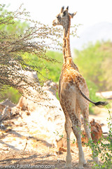 DSC_8846-2 (paul mariano) Tags: paulmarianocom paul mariano allrightsreserved namibia wildlife photography animals africa