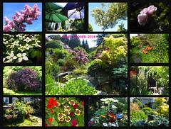 June Garden 2018 (Durley Beachbum) Tags: june garden flowers plants shrubs bournemouth