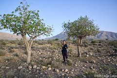 20180330-_DSC0230.jpg (drs.sarajevo) Tags: sarvestan ruraliran iran nomads farsprovince chamsatribe