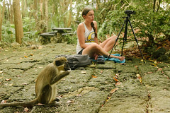 Primate Research Barbados Study Abroad 2017 (Centre College) Tags: 2017 academics barbados behavioralneuroscience day experientiallearning inlab outside psychology research studyabroad summer topshot undergraduateresearch danville kentucky unitedstates usa