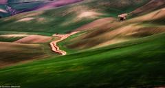 Colline molisane (SDB79) Tags: colline campagna molise ururi grano paesaggio