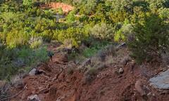Upper Canyon Trail, sunrise progression, Caprock Canyons State Park, Texas (Rick Knepper) Tags: fujifilmgfx50s gf3264mmf4rlmwr