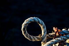 Ohhhhh... (jah32) Tags: rope ropes marine nautical shadow shadows light evening eveninglight knot knots irvingnaturepark bayoffundy stjohn newbrunswick canada