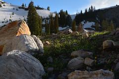 High Creek evening (Brandon Rasmussen) Tags: utah uintawasatchcachenationalforest mountnaomiwilderness highcreeklake hiking backpacking nature landscape nikond7100 nikkor1224mmf4g 1224f4