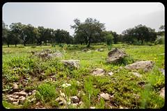 Dehesa (Afotos Amanta) Tags: sierra san pedro dehesa extremadura cáceres verde primavera turismo campo arboles