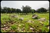 Dehesa (AntonioOQ) Tags: sierra san pedro dehesa extremadura cáceres verde primavera turismo campo arboles