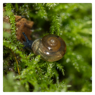 A wee little snail for Snail Saturday
