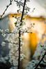 _MG_0355 (grzegorz.maciejewski) Tags: helios 442 art photography