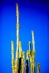 You Went Through an Open Door (Thomas Hawk) Tags: america arizona desertbotanicalgarden papagopark usa unitedstates unitedstatesofamerica cacti cactus desert phoenix us fav10 fav25
