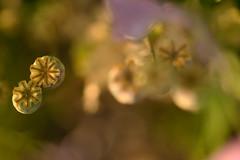 (Knipser85) Tags: sigma 105mm lens objektiv macro makro camera sony alpha a6300