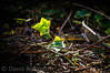 DSC03655 (davyskin46) Tags: ivy plants sony slt tamronspaf70300mmf456diusdlens a57