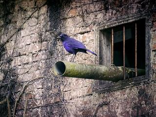 Purple Decadent