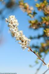 Sunday Morning (Giovanna-la cuoca eclettica) Tags: fiori natura