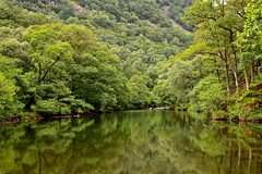 Fifty Shades of Green (Nige H (Thanks for 15m views)) Tags: nature landscape river riverderwent lakedistrict borrowdale borrowdalevalley reflection trees green cumbria england summer