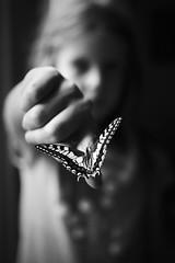 flight instructor (Angelo Petrozza) Tags: flight instructor butterfly farfalla blackandwhite biancoenero bw contrasto angelopetrozza hd35mmmacrolimited